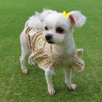 나비소녀 강아지블라우스  프릴소매티셔츠  꽃무늬프릴티  애견면티  강아지옷