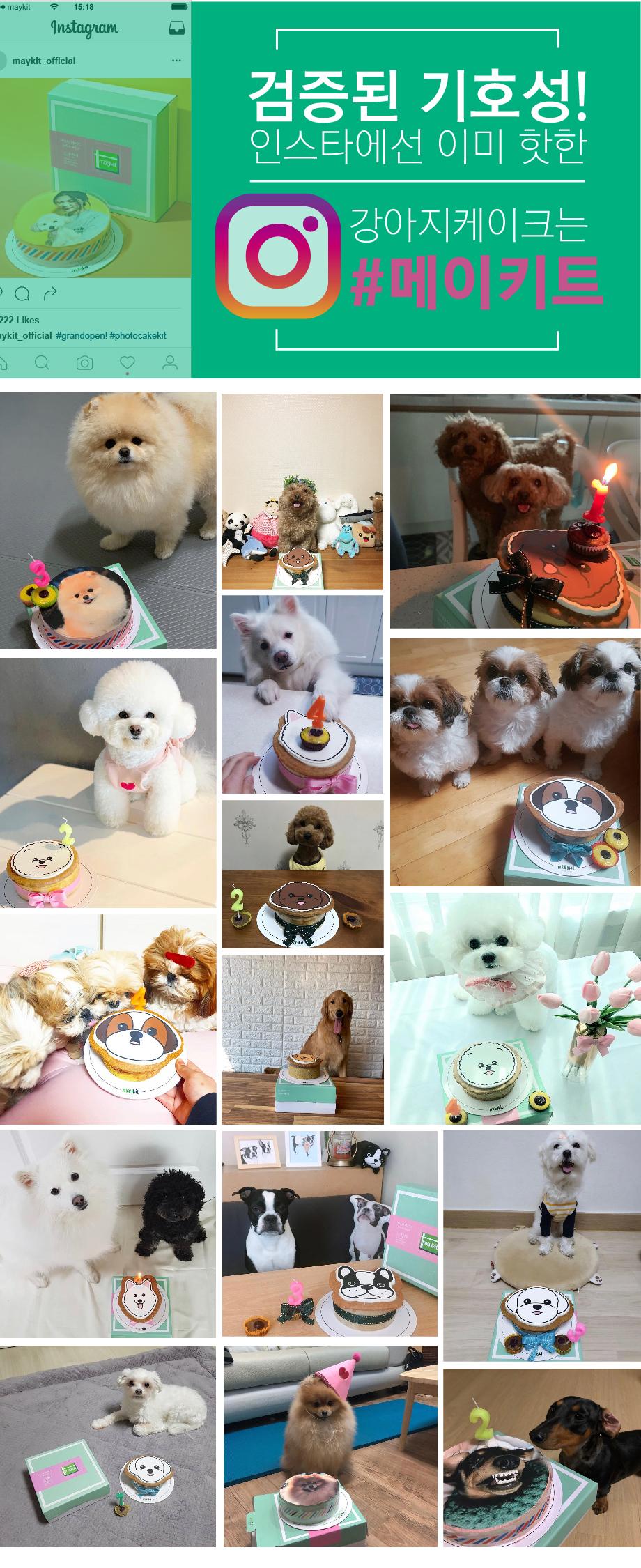 강아지 모양 케이크 말티즈 SHAPE CAKE KIT - 메이키트, 16,900원, 간식/영양제, 수제간식