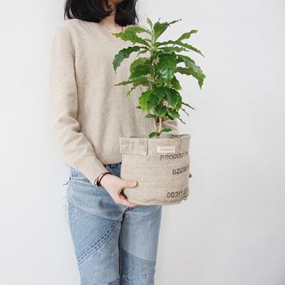 coffeepot 커피팟 애완커피나무 3L