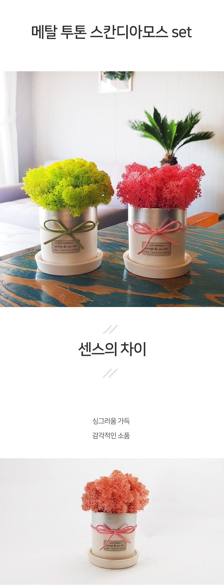 숲앤숨 메탈투톤 스칸디아모스 화분set - 숲앤숨, 13,050원, 허브/다육/선인장, 공기정화식물