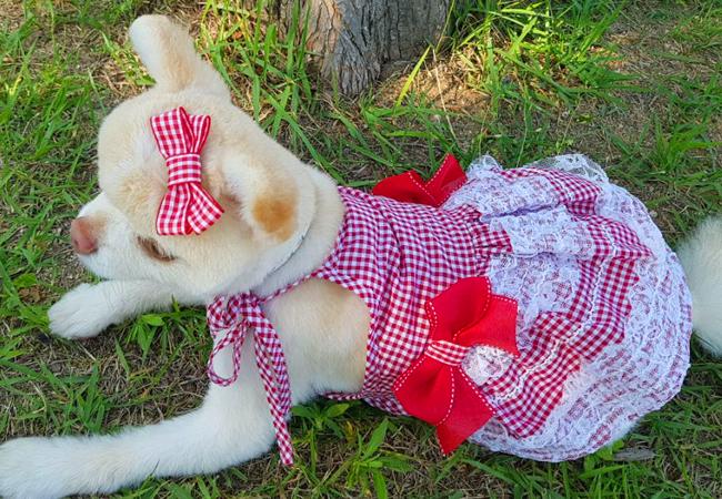 리본베리원피스 (RED)17,500원-오브스페이스펫샵, 강아지용품, 의류/액세서리, 의류바보사랑리본베리원피스 (RED)17,500원-오브스페이스펫샵, 강아지용품, 의류/액세서리, 의류바보사랑