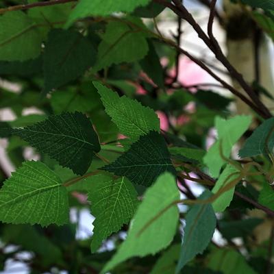 인조나무 조화나무 인테리어조화 자작나무 240 사방형