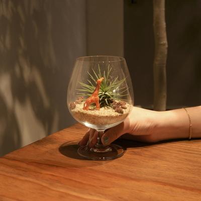 와인잔 이오난사 미니사막 DIY 세트 공기정화 먼지먹는 식물