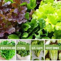 잎채소 쌈채소 씨앗 모음 마이플랜트 나물 약초 상추 배추 종자 베란다텃밭