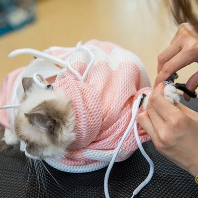 고양이 캣 트래블파우치 버스마켓  파우치 목욕용품