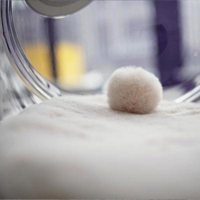 모볼리 고양이 강아지 쿠션 방석 - 아이보리