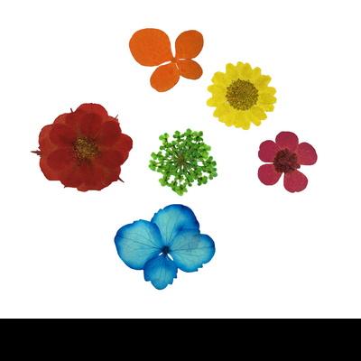 꽃보듬(압화) 종합꽃 세트