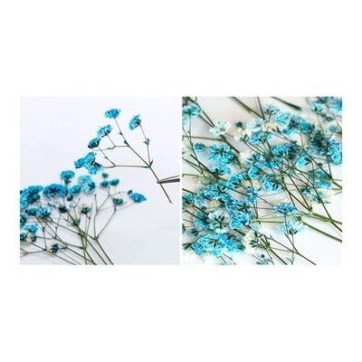 꽃보듬(압화) 안개꽃 (블루)