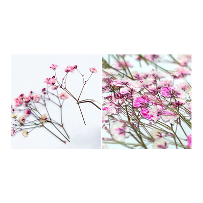 꽃보듬(압화) 안개꽃 (핑크)