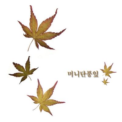 꽃보듬(압화) 미니단풍잎