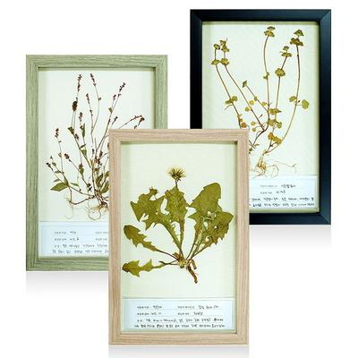 식물표본 체험학습 액자 (5가지 색상)