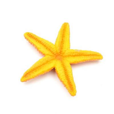 276829 불가사리 Starfish