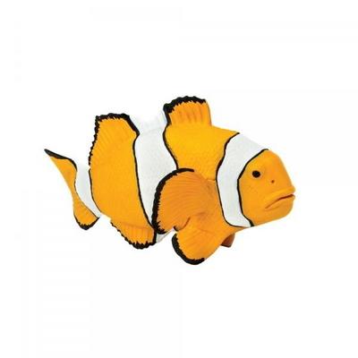 204129 클라운피쉬 Clown Anemonefish