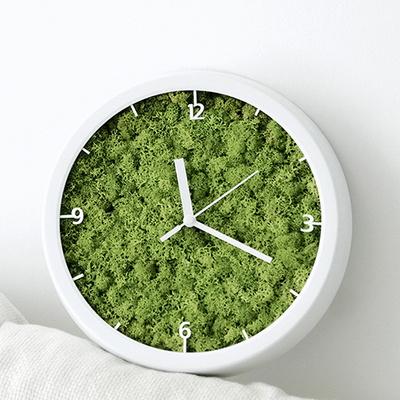 스칸디아모스벽걸이시계 공기정화식물