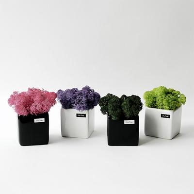 스칸디아모스 화분 6.5cm 자기화분 공기정화식물