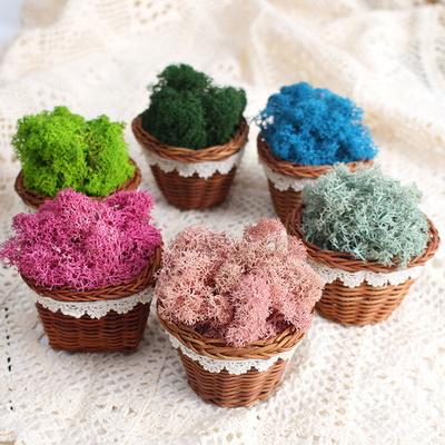 공기정화식물 천연모스 천연이끼 바구니 세트(손잡이 없음) 6colors