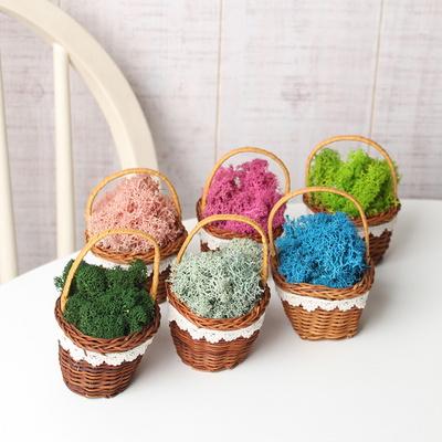 공기정화식물 천연모스 천연이끼 바구니 세트(손잡이 있음) 6colors