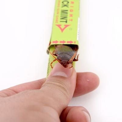 엽기 벌레 껌