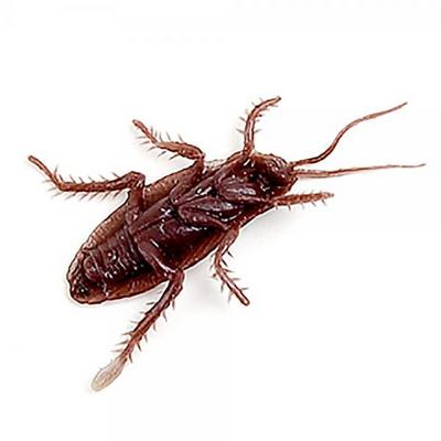 리얼 바퀴벌레 모형