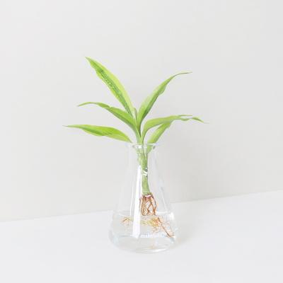 메이크정글 GLASSY NO.3 공기정화식물 유리병 수경화분