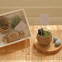 [식물선물세트] 참숯 이오난사 행잉바구니