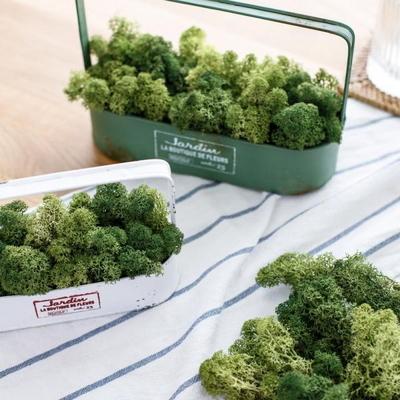 6컬러 25g 천연이끼 실내습도조절 공기정화 식물 스칸디아모스