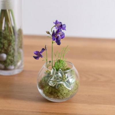 DIY 테라리움 스칸디아모스 화병 천연이끼 실내습도조절 공기정화식물