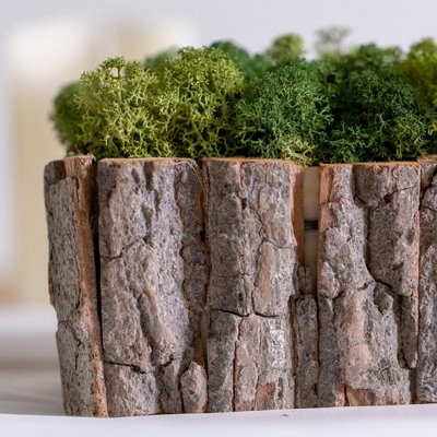 러프우드 스칸디아모스 화분 100g 천연이끼 실내습도조절 공기정화식물