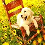 Q648 낡은의자위해맑은강아지 DIY명화그림그리기
