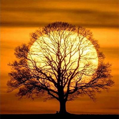 [피포페인팅]GX5942 Sunset tree  size 40x50cm