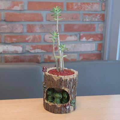 개구리 가족 다육 식물 화분