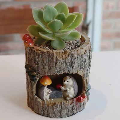 고슴도치 가족 다육 식물 화분