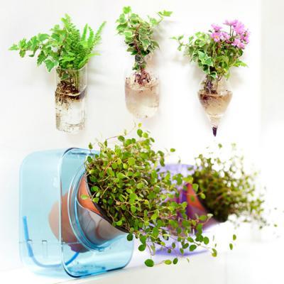 반려식물 쉽게 키우기