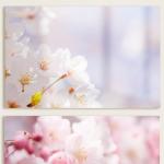 tm030-아크릴액자_팝콘같은벚꽃(대형)