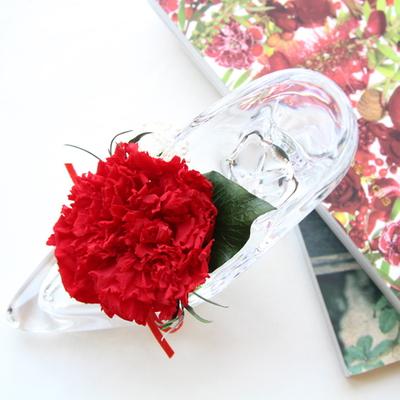 더봄 - 유리구두카네이션 - 레드