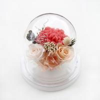더봄 원형돔 카네이션 - 핑크오팔