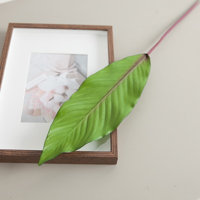 열대나뭇잎 중 72cm