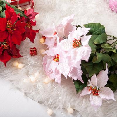 베이직포인꽃부쉬 대 54cmM 포인꽃 크리스마스 TRFART