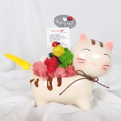스칸디아모스화분(대)-고양이
