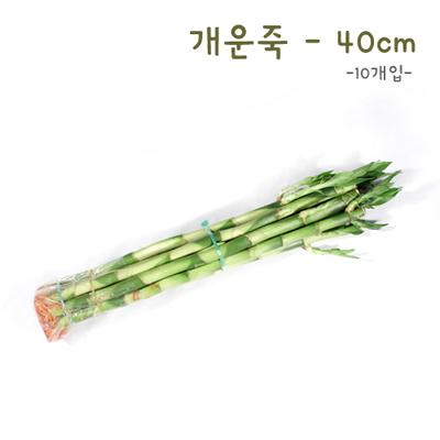 개운죽 40cm - 10p