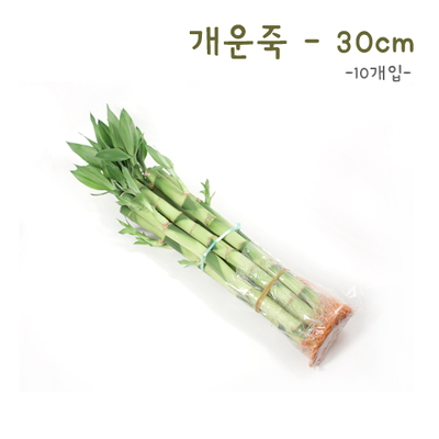 개운죽30cm- 10p
