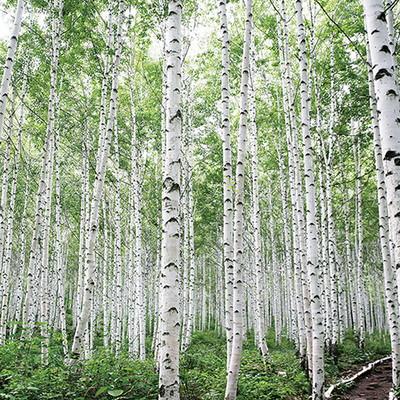 사계절 자작나무 플래너(Daily Plan)