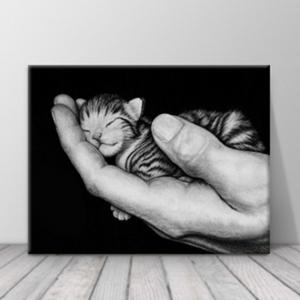 인테리어 거실 액자 아기고양이 흑백 사진 zo(54)