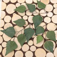 나뭇잎-자작나무잎(1봉=24개) 조화