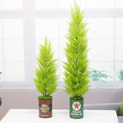 윌마(율마) 나무 빈티지 깡통화분 소 65cm