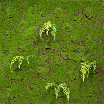 네추럴 인조 이끼 벽 장식 매트 1Mx1M, 플렌트 월 모조이끼 인테리어조화