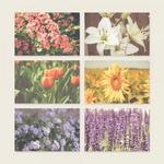 가든플라워 포스트카드 엽서
