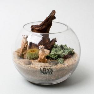 사막의 커플미어캣(M) 테라리움