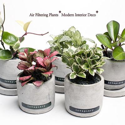 실내공기정화식물 미니시멘트화분