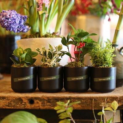 (미니화분4종세트)집들이 개업선물 실내공기정화식물